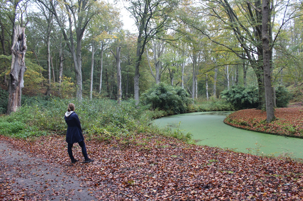 Herbst im Elswout