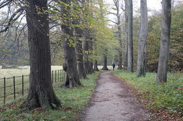 Spazieren im Herbst im Elswout