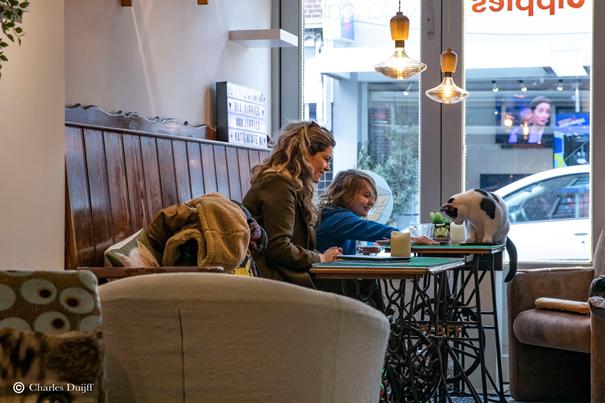 Besonderes Katzencafé in Haarlem